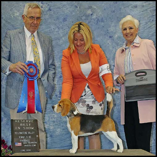 Zsa Zsa Reserve Best in Show